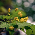 010009-yellow-flowers-in-madrid-botanic-gardens
