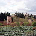 022009-alhambra-plants-in-granada