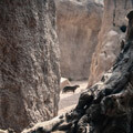 031209-mongoose-between-rocks