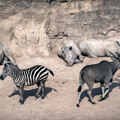 032409-rhinos-and-friends