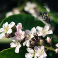 036209-bee-near-flower