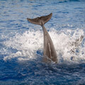 039009-dolphin-tail