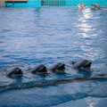 039209-hungry-dolphins