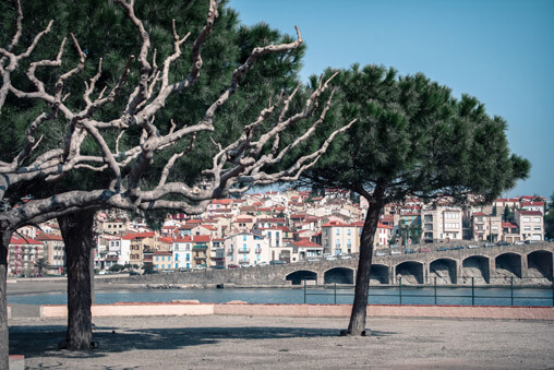 039709-french-beach-trees