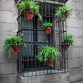042809-Barcelona-window