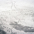 048210-birds-footprints-in-the-snow2