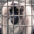 049410-monkey-behind-bars