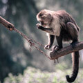 049710-playful-monkey