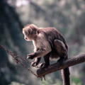 049810-playful-monkey2