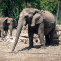050210-two-elephants