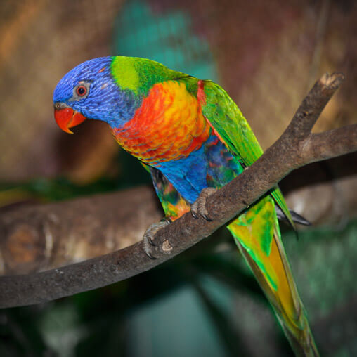 051910-colorful-parrot