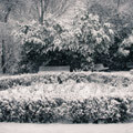 053110-snowy-gardens-in-holland