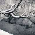 053210-snowy-tree-in-lake-in-holland