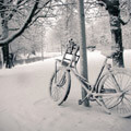 053310-snowy-bike-in-park-in-holland