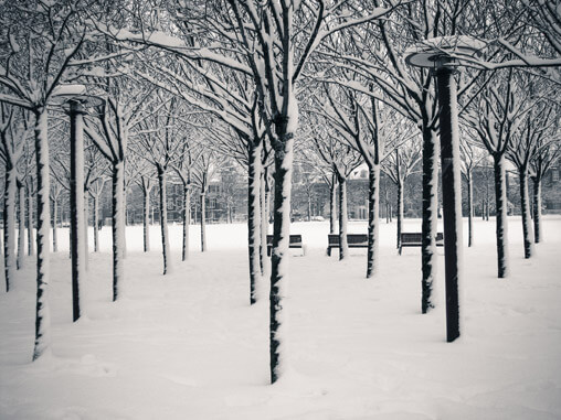 053710-snowy-trees-in-holland
