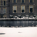 054410-seagulls-on-frozen-lake-in-den-hague