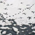 055210-birds-footprints-in-the-snow