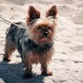 063611-dog-in-texel-sands