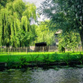 067411-giethoorn-canal-green