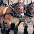 069911-horses-in-france