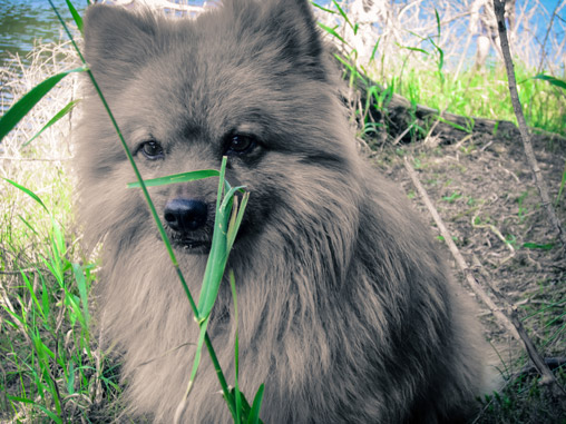 078313-dog-in-nature