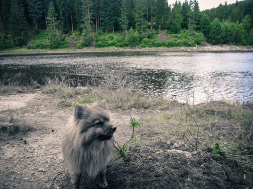 078413-dog-near-lake